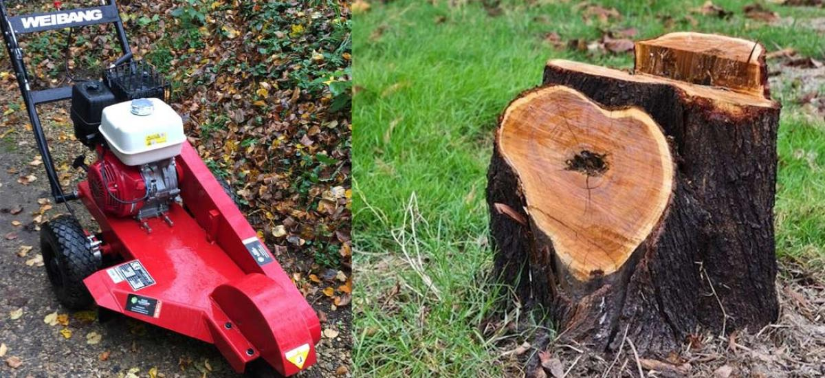Stump grinder hire for autumn tree removal across Oxon and Bucks